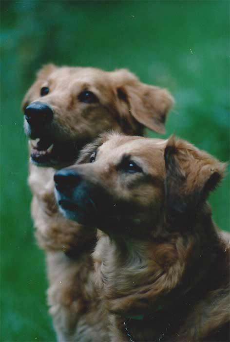 hund ruhiges wesen freundlich